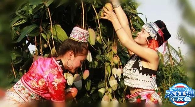元江红河谷金芒果旅游文化节6月12日三天自驾露营