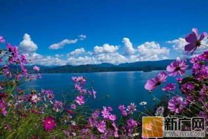 格桑花都开好了 去泸沽湖畔尽享美好时光