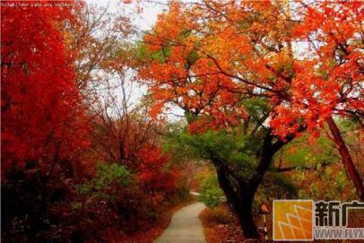 国内7大绝美红叶观赏地,9月起一个个挨着去!