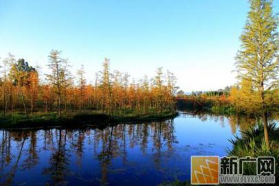 昆明各大湿地公园秋景