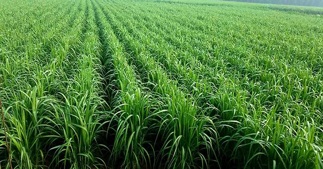 """弥勒加快绿色食品加工中心建设,打造""""世界一流健康生活目的地"""""""
