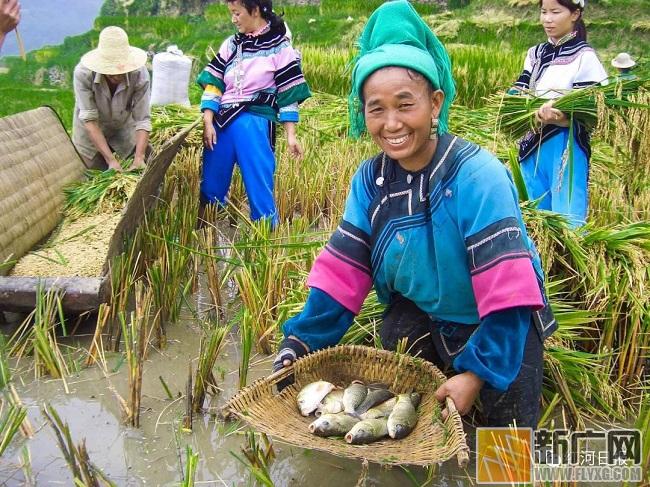 """元阳:保护优先+发展优化,新时代千年""""活态世界遗产""""迸发新活力"""