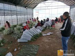 泸西午街铺镇强化外出务工服务全力帮助农民工就业