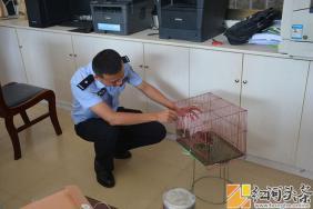 金平:驻村青年干部捡大眼萌鹰 及时联系民警救助