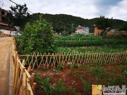 """泸西:林树小笼桥村""""农耕文化生态菜园""""自采自种果蔬体验 等你来!"""