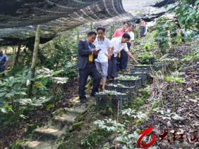元阳县:小新街、逢春岭、大坪联合组织开展县人大代表联组活动