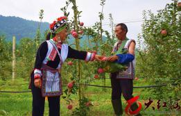 弥勒小龙潭村400亩高山苹果热销省内外