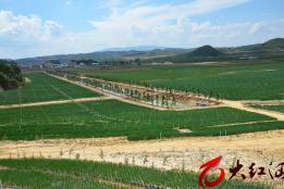 泸西:午街铺镇兴建山林村优质梨标准化种植示范基地1300亩