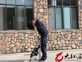 高质量养犬需要注意什么?训导员小石告诉你
